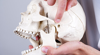 dentist pointing to to skull